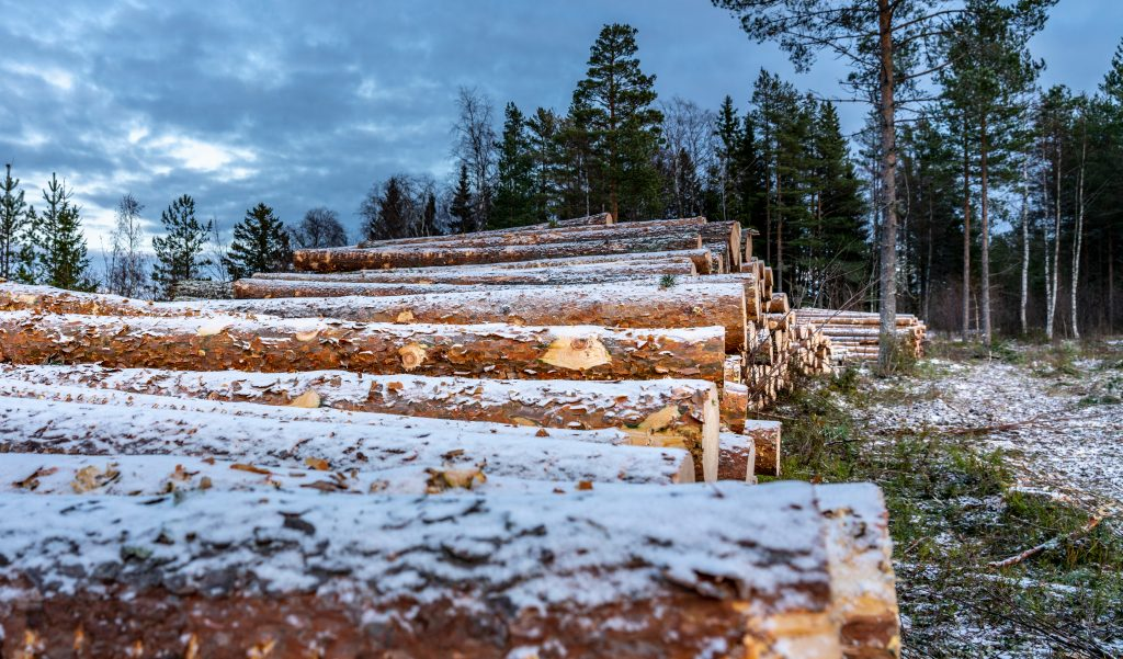harvested logged timber on timberland property