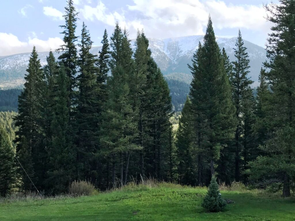 established trees in front of mountain view